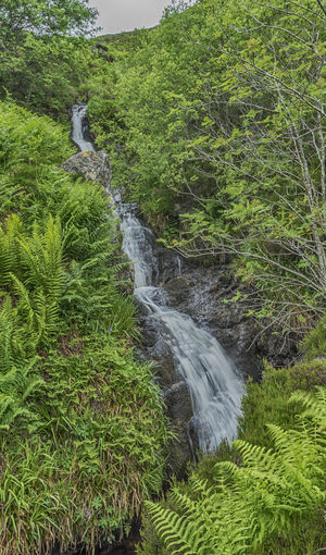 Came across this waterfall while walking in Glen Turret on Saturday. Beauty In Nature Crieff Day Glen Turret Grass Green Color Growth Loch Turret Motion Nature Outdoors Perth And Kinross Perthshire Plant Scenics Scotland Scottish Highlands Scottish Scenery Sky Tranquil Scene Tree Water Waterfall