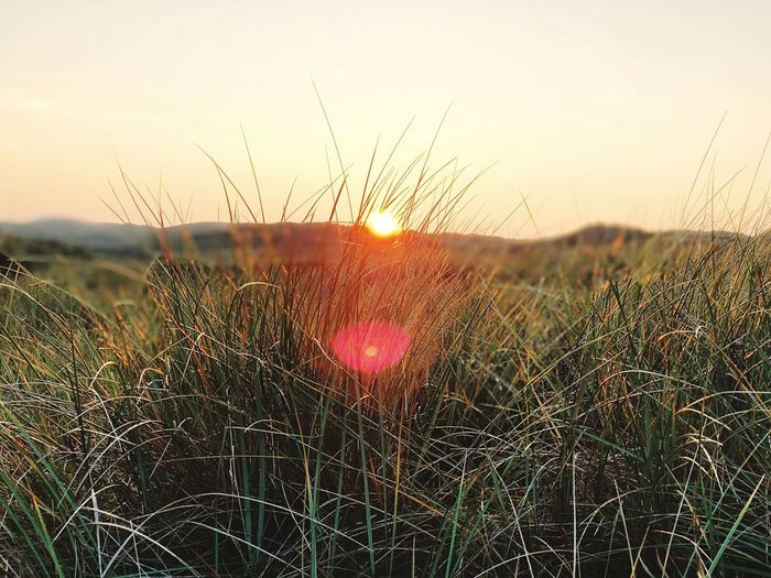 Evening reed Nature Is Truth Sunset Plant Nature Sky Beauty In Nature Growth No People Outdoors Close-up Scenics - Nature Fragility Nature Beauty In Nature Grass Sun Tranquil Scene Lens Flare Sunbeam Landscape