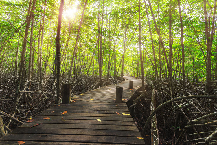 Plant Tree The Way Forward Direction Forest Tranquility Nature Land Footpath Wood - Material Day Growth Beauty In Nature Boardwalk No People Sunlight Tree Trunk Trunk Tranquil Scene Outdoors WoodLand Bamboo - Plant Wood
