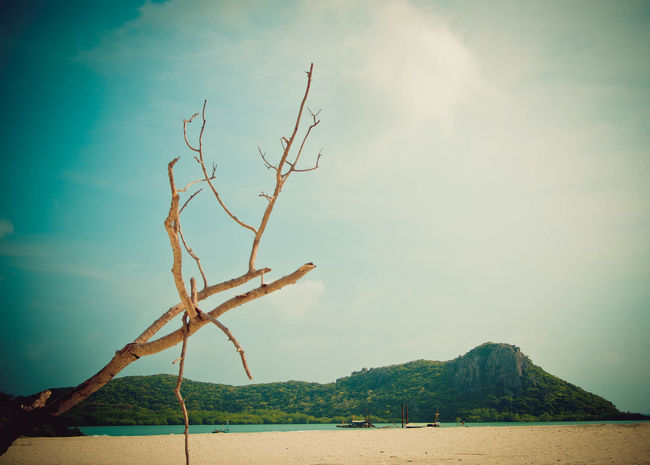 Lonely branches. Tree Branches Branches Bare Branches Vietnam Beach Beachphotography Mountains Mountain