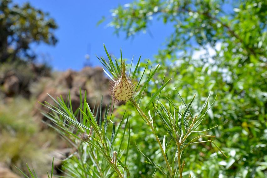 Weeds Freshness Harties Growth Hartbeespoort Dam Wall Shadows - Harties Hartebeespoort Hartbeespoort Dam Outdoors No People Green Color Grass Weeds Are Beautiful Too Growth Nature Plant Green Color Beauty In Nature Day Tranquility Flower Fragility Close-up Freshness