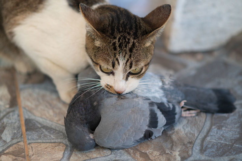 Close-up of a cat drinking water