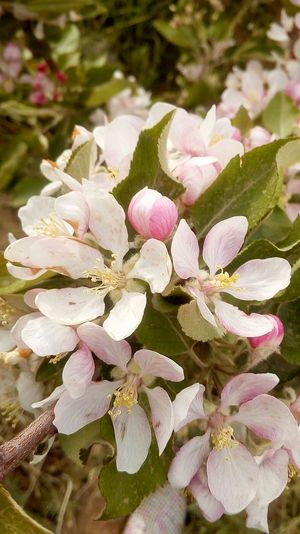 Plant Flower Beauty In Nature No People Nature Nice Pics Beauty In Nature 🌿☘️🌲🍃 Blossom White Color Photos Beautiful Flowers Photography Nature Photography Wildlife Sunlight Pink Color Moments PhonePhotography