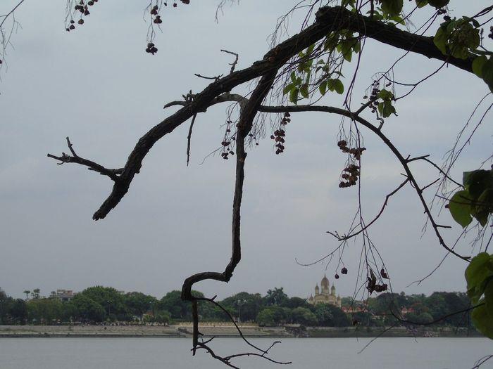 Tree Water Bird