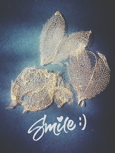 Just smile Star - Space No People Beauty In Nature Universe In One Hand Handmade Beauty In Ordinary Things Springtime Universe ✌💖✌💖🐳🐋🐬🐟🐚🐙🌍🌎🌏🌞🌝🌞🌊 Planet Earth Day Flower Head Flower