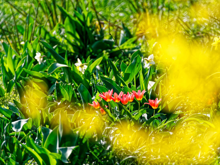 Plant Flowering Plant Growth Flower Green Color Beauty In Nature Freshness Fragility Vulnerability  Nature Close-up Selective Focus No People Day Yellow Petal Flower Head Inflorescence Plant Part Land Outdoors