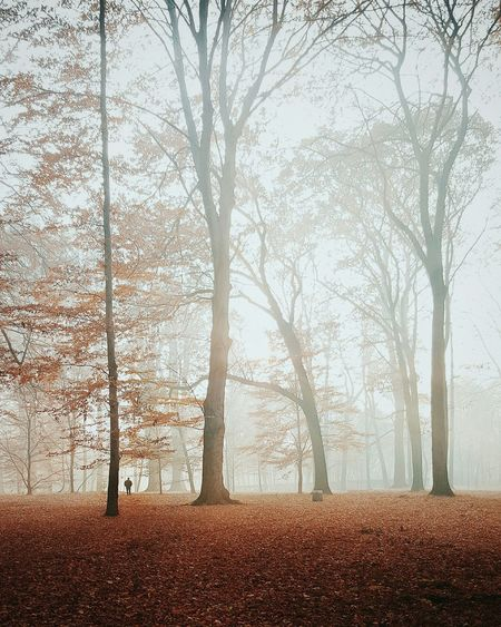 Trees on field in foggy weather during autumn