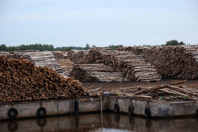 Baumstämme Hafen Holz Holzlager No People Outdoors Russland