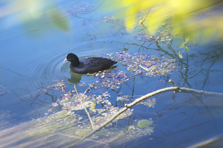 Animal Animal Wildlife Beauty In Nature Duck Eend Ente Natur Nature Nature Outdoors Pato Plant Wildlife
