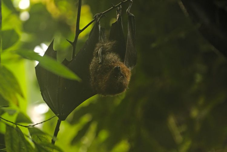 Chiroptera Megabat Animal Animal Themes Animal Wildlife Animals In The Wild Beauty In Nature Close-up Day Flughunde Focus On Foreground Green Color Growth Invertebrate Leaf Nature No People One Animal Outdoors Plant Plant Part Selective Focus