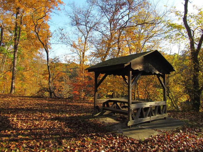Park Shelter in