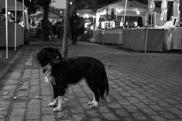 Dog Animal Themes Mammal Domestic Animals Pets One Animal Outdoors Evening CityFair City Life Street Photography Streetphotography Market Blackandwhite Blackandwhite Photography Black And White Streetphoto_bw Portrait Embrace Urban Life
