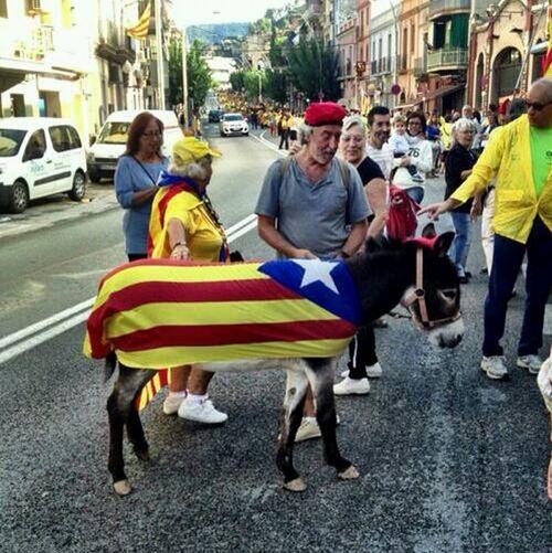 Burret català a la cadena humana!
