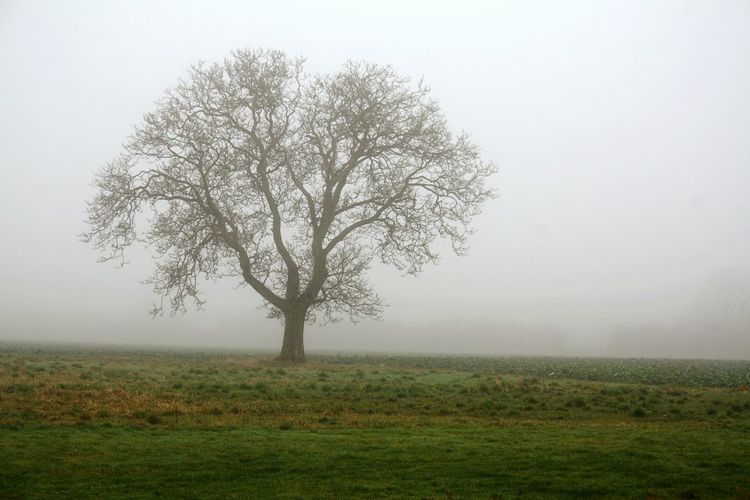 Tree Nature No People Fog Bare Tree Tranquility Beauty In Nature Idyllic Grass Landscape Single Tree Extreme Weather Outdoors Day Sky Branch Inpirational Inspirations Banbury, England