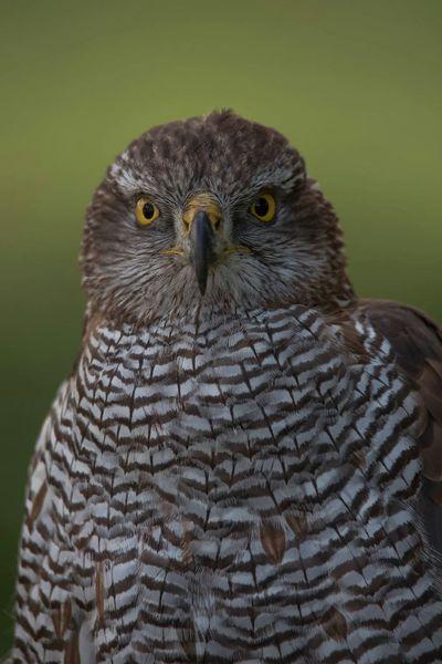 Wildlife & Nature Bird Of Prey Predator Oiseaux Bird Animal Rapace  Photo Around You Predatory France