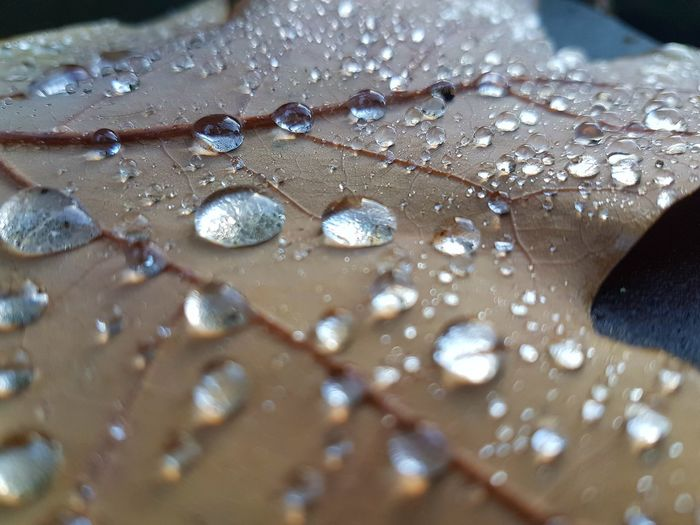 Water Close-up Autumn leaves First Eyeem Photo