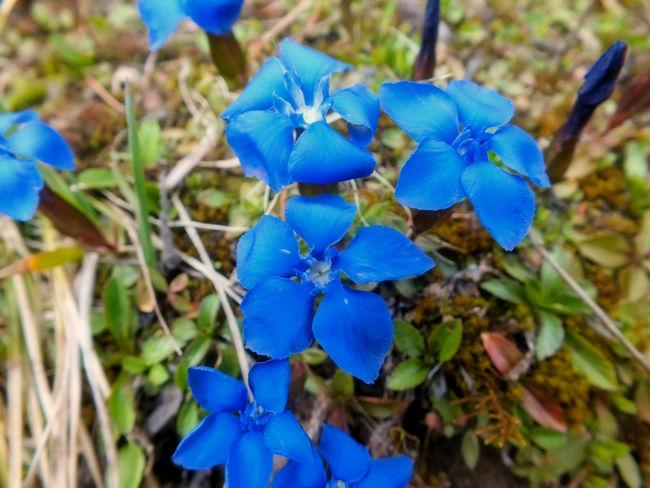 EyeEm EyeEm Nature Lover EyeEm Selects EyeEm Gallery Beauty In Nature Blue Błękit Close-up Eye4photography  Flower Fragility Freshness Growth Kwiaty Nature Niebieski Outdoors Petal Plant