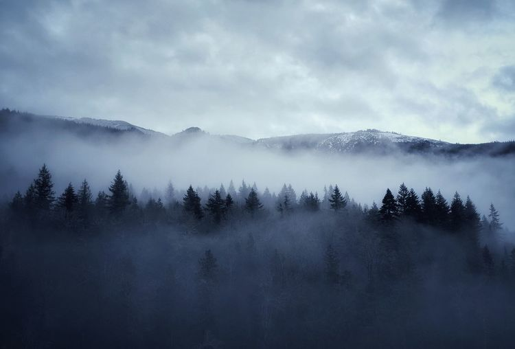 Tree Snow Mountain Cold Temperature Winter Forest Fog Pine Tree Pinaceae Tree Area