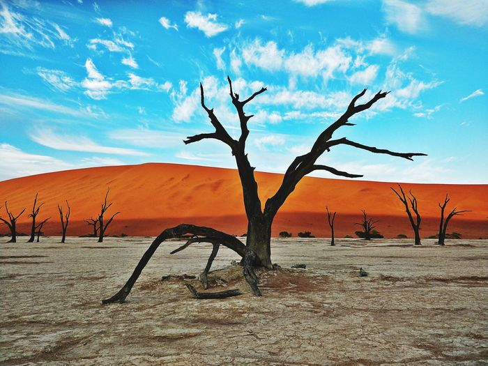 Namibia Landscape Namibia Desert Africa Deadvlei Dunes Namib Desert Deadtrees Trees EyeEm Selects Sand Dune Tree Bare Tree Desert Arid Climate Sand Rural Scene Drought Accidents And Disasters Mountain Dead Tree Extreme Terrain