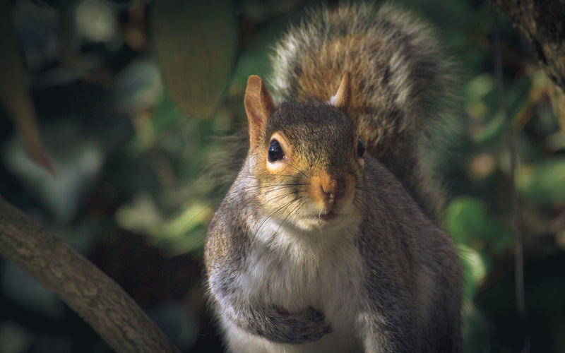 Portrait of squirrel eating outdoors