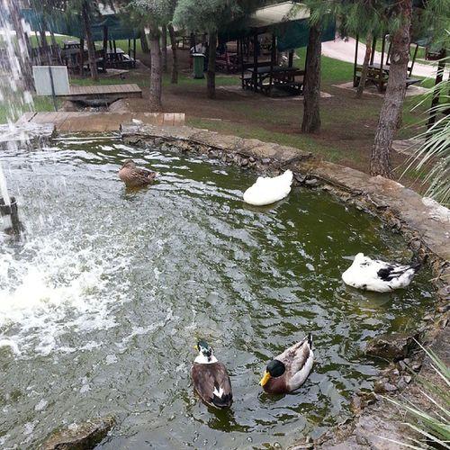 Duck Ordek Nature Green botanikbahce nezahatgokyigit saklicennet huzur