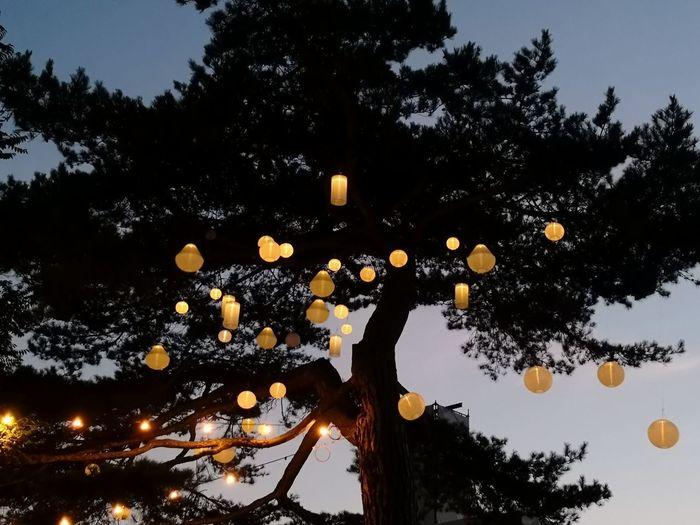 Arbre à Beauregard Beauregard Tree Astronomy Moon Silhouette Branch Astrology Sign Sky The Great Outdoors - 2018 EyeEm Awards
