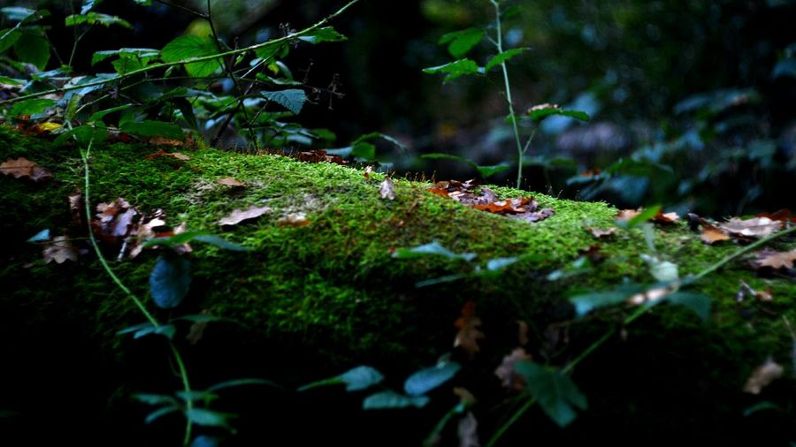 Moss caught in the sunlight EyeEmNewHere EyeEm Nature Lover Beauty In Nature Westsussex Branch Mossy Wood Moss Forest Nature No People Grass Outdoors Tranquility Day Tree Close-up Animal Themes Freshness EyeEmNew Here EyEmNewHere The Week On EyeEm