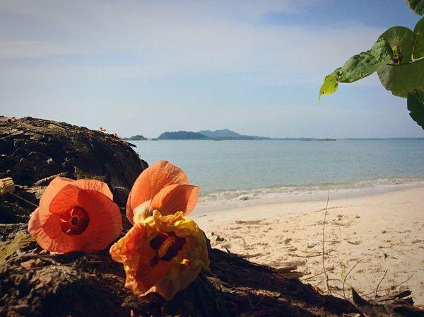 Flower Beach Nature Sea Beauty In Nature Flower Orange Sand Nature Outdoors