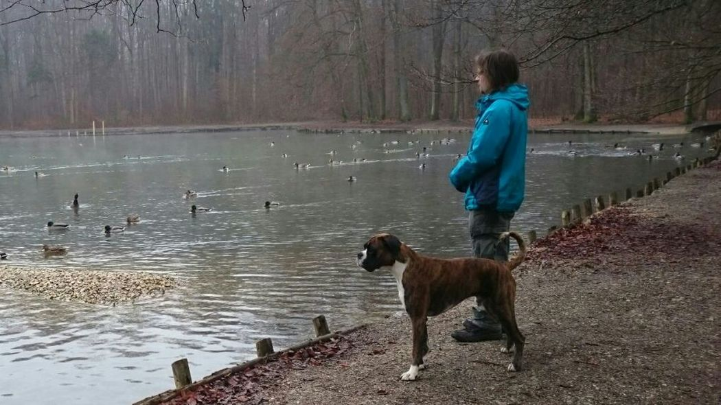 Me,my Boxer And I I Love My Dog❤ Dogsworld Boxerlove Boxer Dogs Lake BóxerWeekend