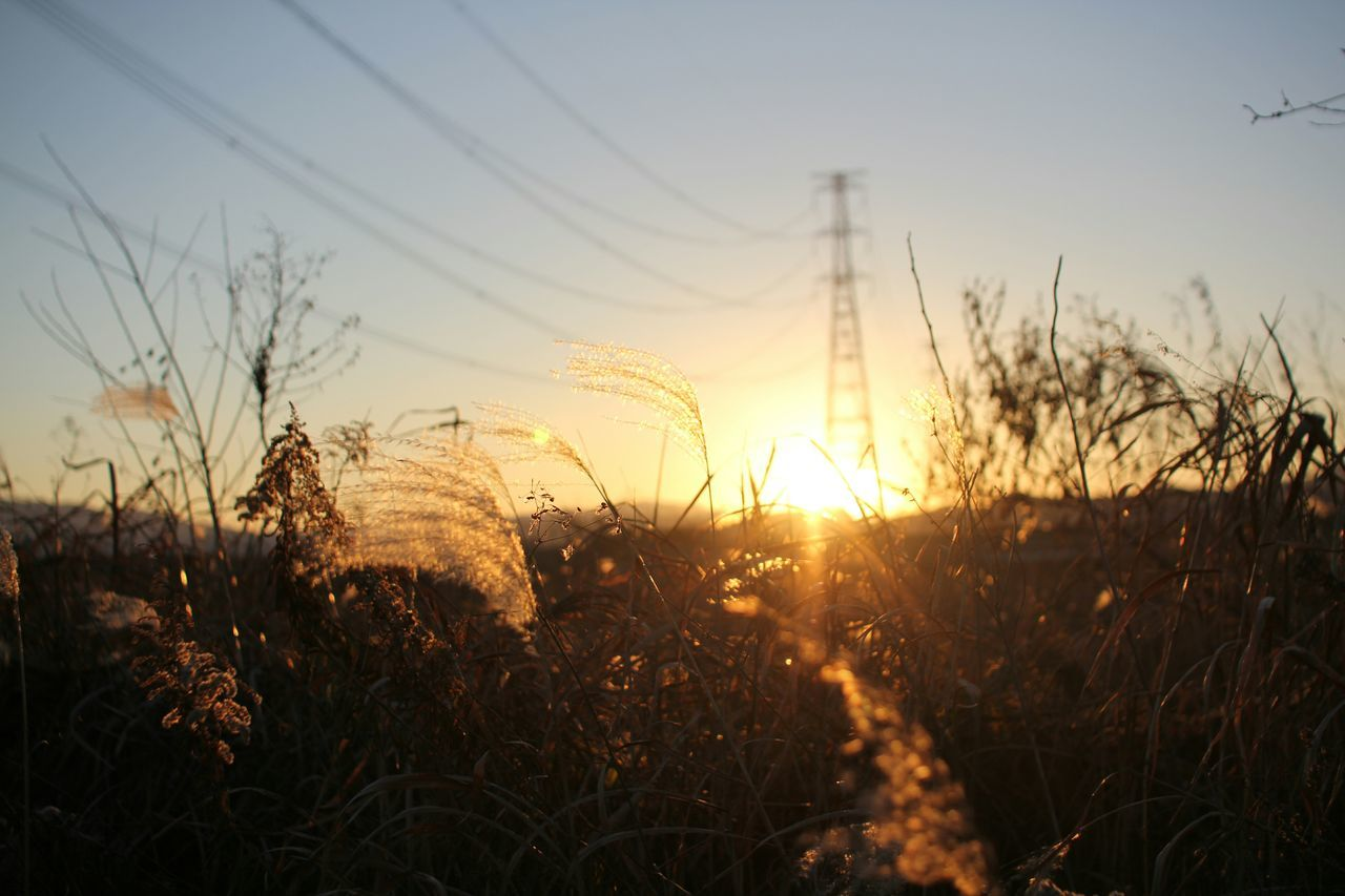 sunset, sun, tranquility, plant, grass, tranquil scene, nature, sunlight, field, beauty in nature, scenics, growth, sky, landscape, reed - grass family, silhouette, orange color, sunbeam, idyllic, outdoors