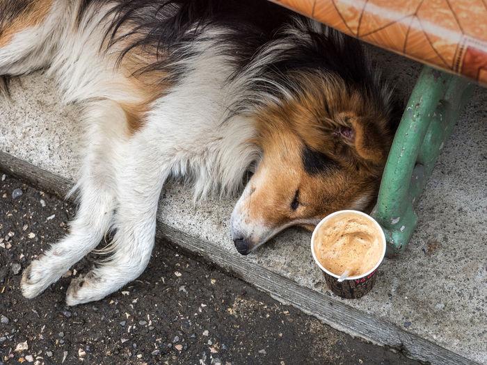High Angle View Of Dog And Coffee