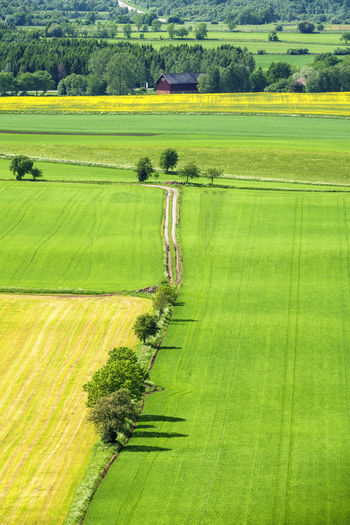 Rural landscape view with a dirt road on the fields