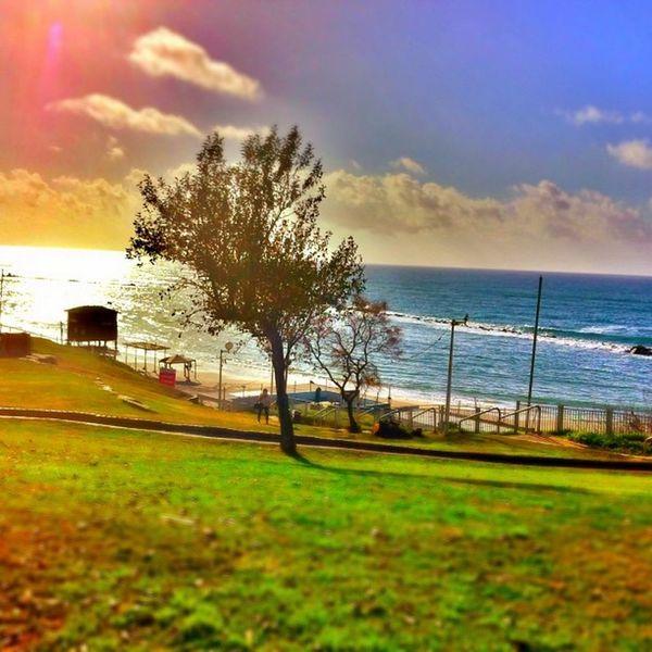 Israel Israel_times Instrael Ig_israel igersisrael insta_global batyam beach coast shore tree