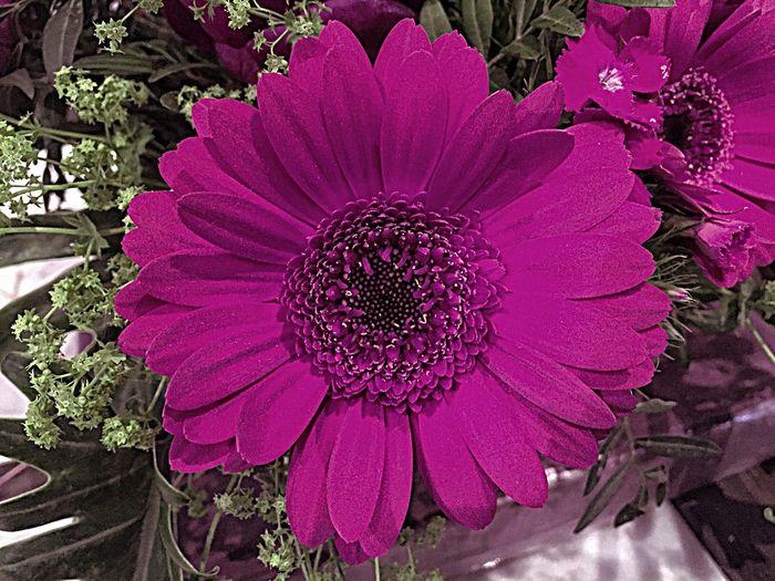 Violet Lila Flowers