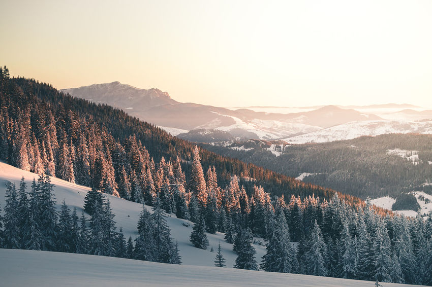 Beauty In Nature Cold Temperature Coniferous Tree Environment Forest Golden Hour Idyllic Landscape Mountain Mountain Peak Mountain Range Nature No People Non-urban Scene Pine Tree Plant Scenics - Nature Sky Snow Snowcapped Mountain Sunrise Tranquil Scene Tranquility Tree Winter