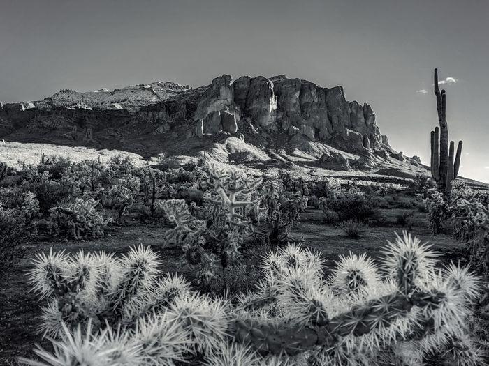 Cactus plants growing on rock against sky
