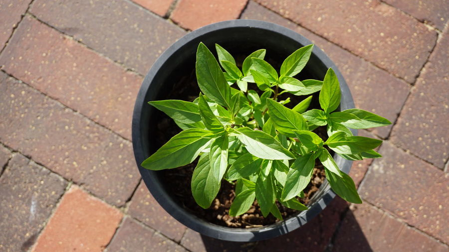 High angle view of plant growing in container