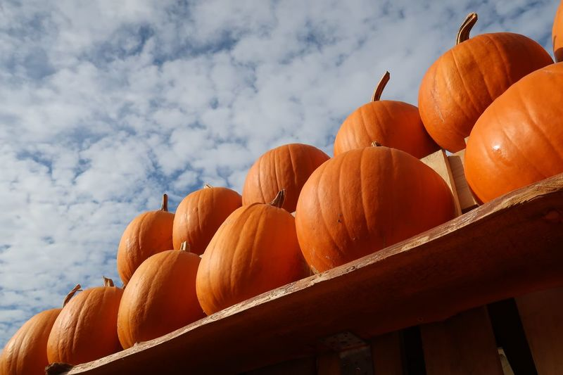 Pumpkin Halloween Kürbis Food And Drink Food Healthy Eating Cloud - Sky Orange Color Freshness Fruit Sky No People Wellbeing Outdoors Sunlight Pumpkin Orange - Fruit Orange Vegetable Abundance Low Angle View Day Nature