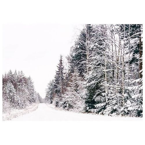 Joyful outdoor days. Jagalskarsverige Sweden Sverige Nature Naturelovers Outdoor Winter Snow Snowflakes Vsconature VSCO Vscogood Vscocam Igerssweden Dalarna Leksand