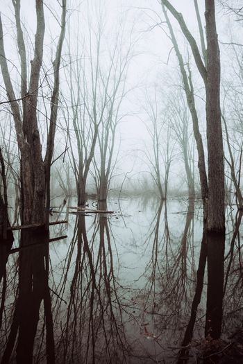 Swamp Fog Foggy