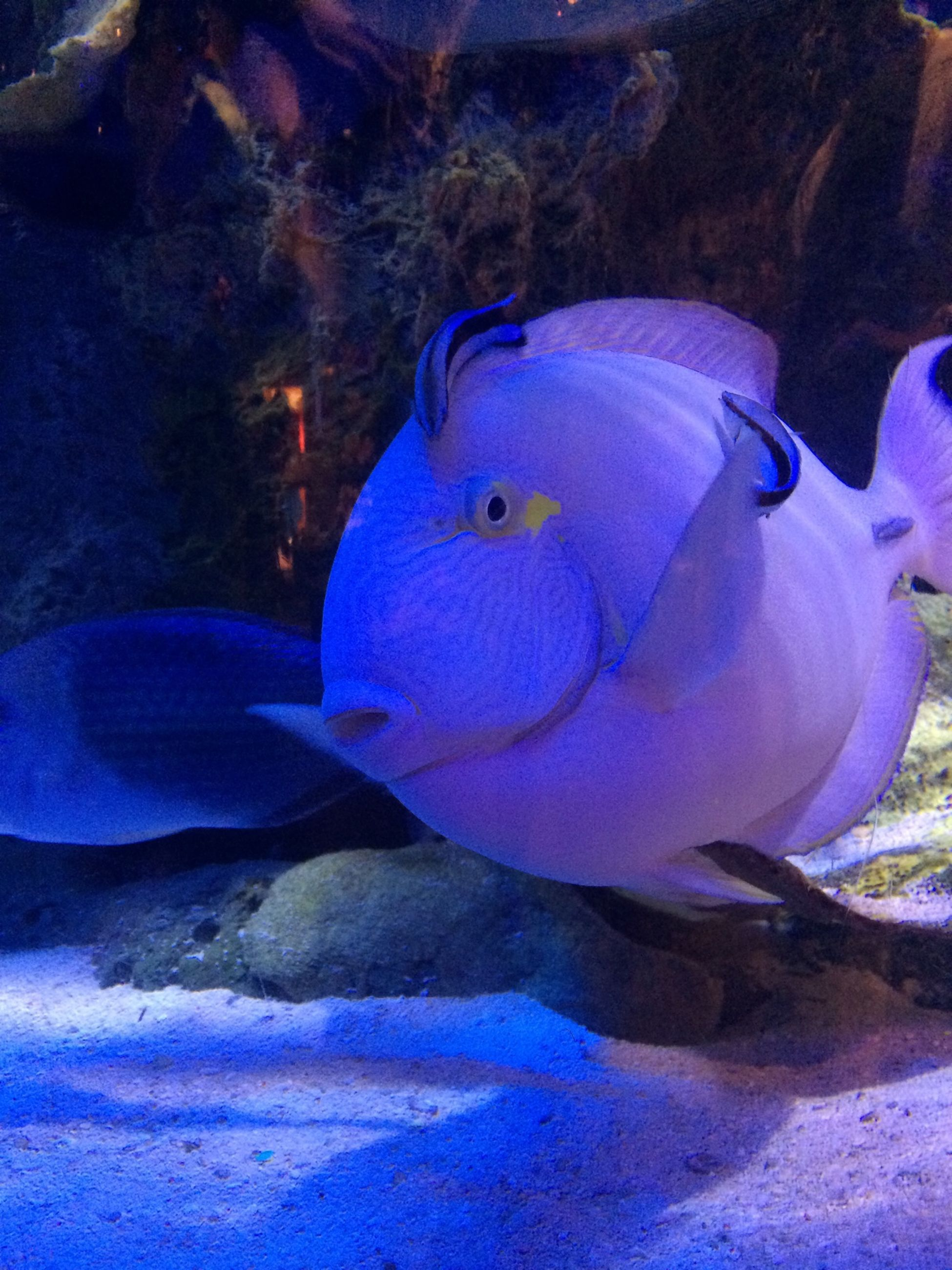 animal themes, underwater, swimming, animals in the wild, water, sea life, wildlife, fish, undersea, sea, one animal, blue, aquarium, nature, beauty in nature, aquatic, close-up, coral, animals in captivity, zoology