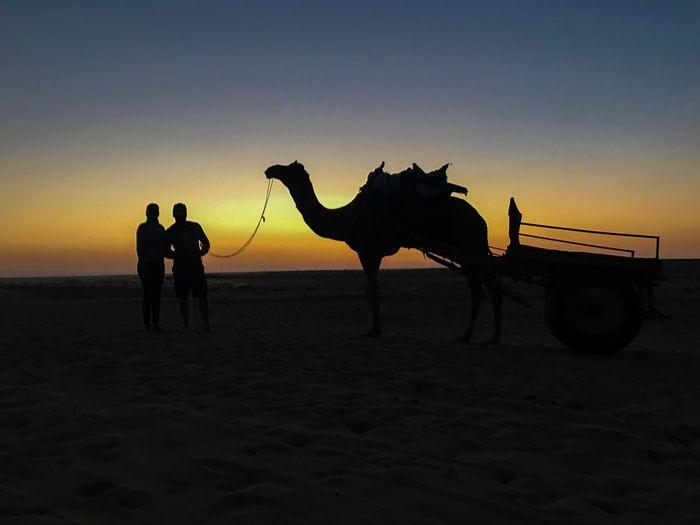 Love ♥ Thar Desert Jaiselmerdiaries Rajasthan