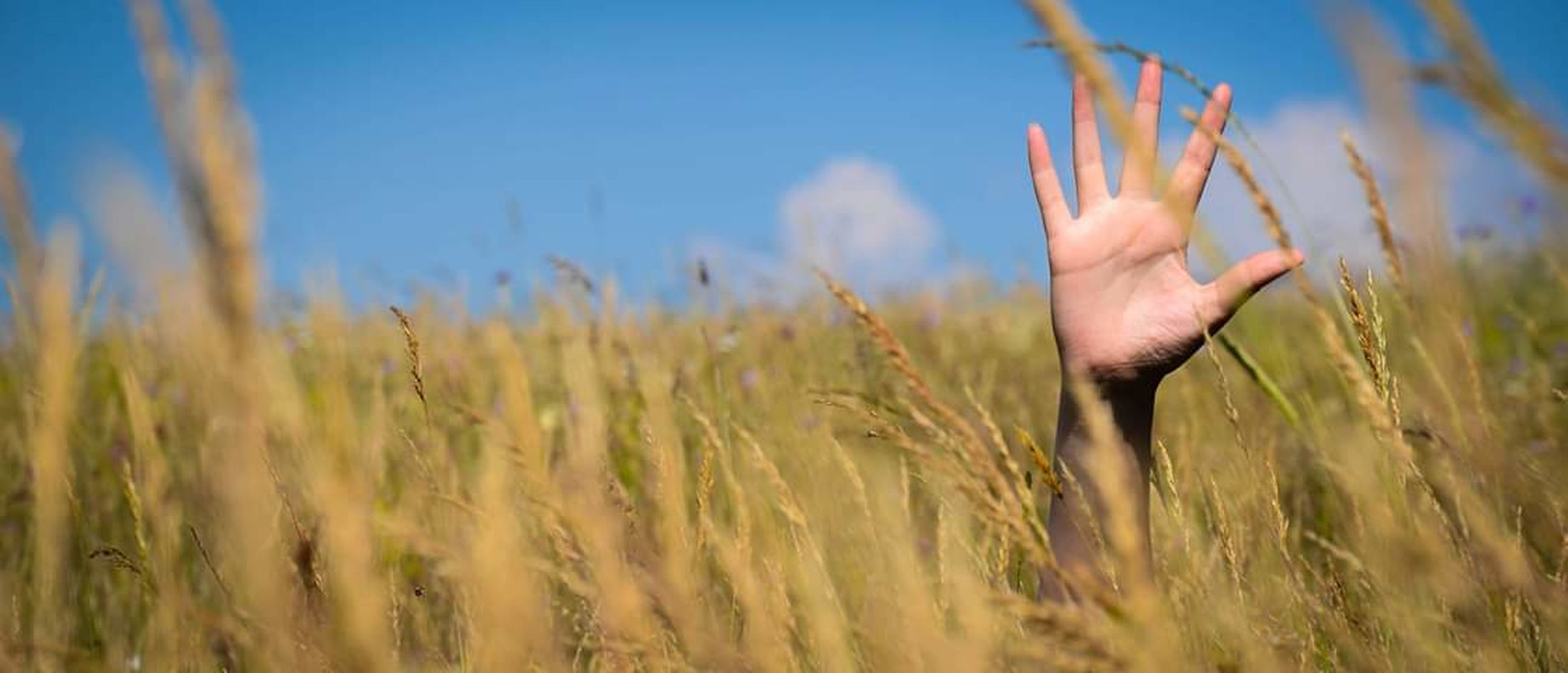 human body part, field, hand, human hand, land, plant, one person, agriculture, crop, selective focus, body part, cereal plant, wheat, nature, growth, day, sky, landscape, rural scene, outdoors, human limb, finger, human arm, arms raised