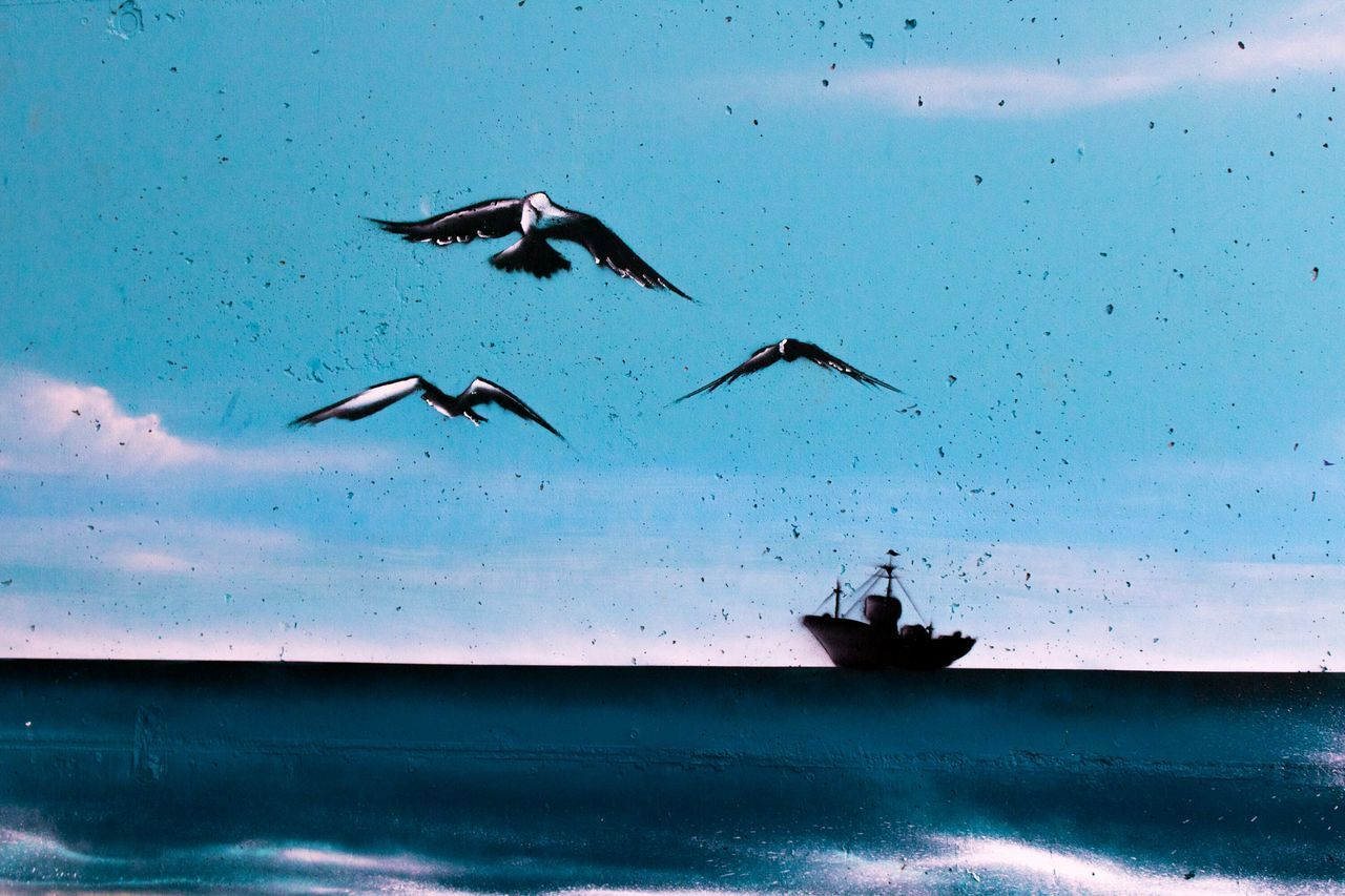 Sea Water Outdoors Blue Nature Day Beach Nautical Vessel Bird Flying No People Animal Themes Sky Graffiti Wall Graffiti Art Graffiti & Streetart Graffiti Painted Image Close-up Sunglasses Reflection KeroArt Kero