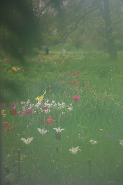 Nature Growth Environment Delicate Tissue Flower Summer Grass No People Flora Leaf Landscape Blooming Field Of Flowers Tranquil Scene Meadow Flowerfield Fresh Full Frame Tranquility Botanical Botany Variation Various Colors Colorful