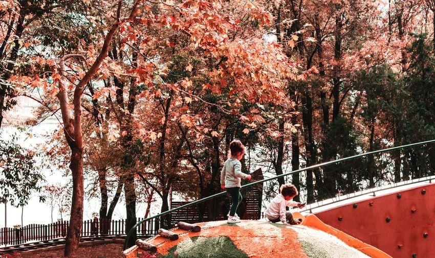 People standing on footbridge against trees