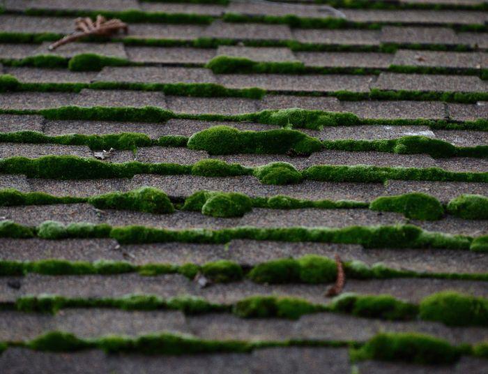 Close-up of moss on ground