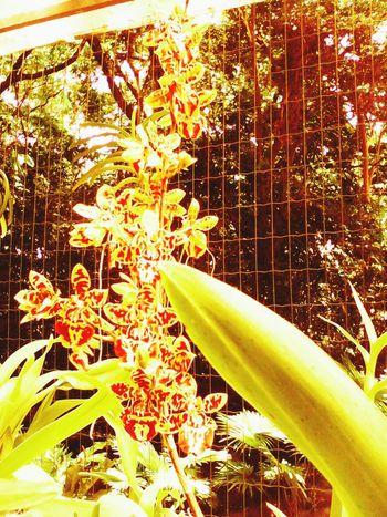 Flowers,Plants & Garden Flowers Of The World. Orquideas EyeEm Nature Lover