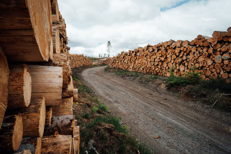 View of logs on road in forest