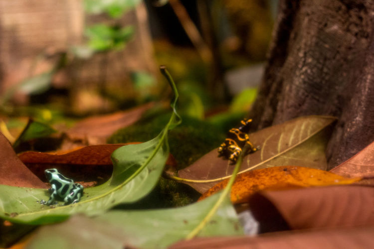 Plant Part Animal Beauty In Nature Zoology Close-up Animal Wildlife Poisonous Frog Frogs Frog Perspective